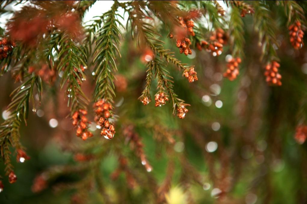 Raindrops Are Falling - Wisdom's Webzine