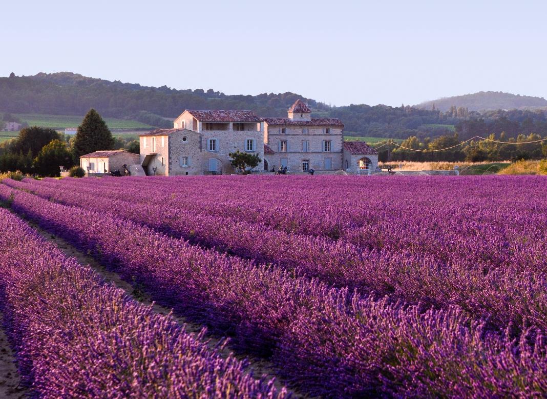 Lavenders - Wisdom's Webzine