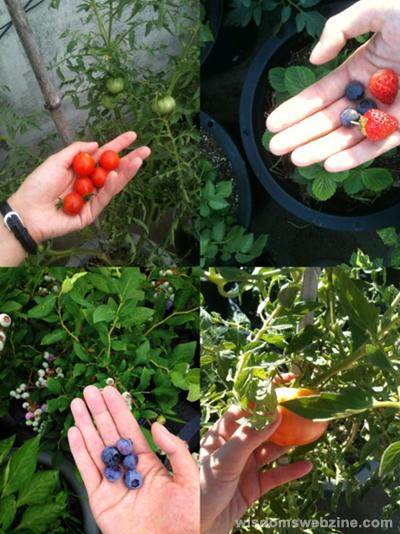 Harvest In The City - Wisdom's Webzine