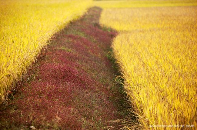 Party of Colors, Autumn - Wisdom's Webzine
