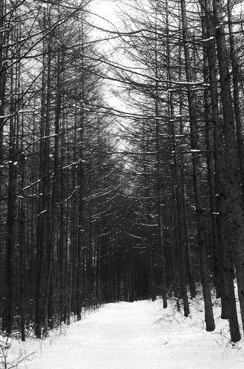 New Beginning, Winter Trip