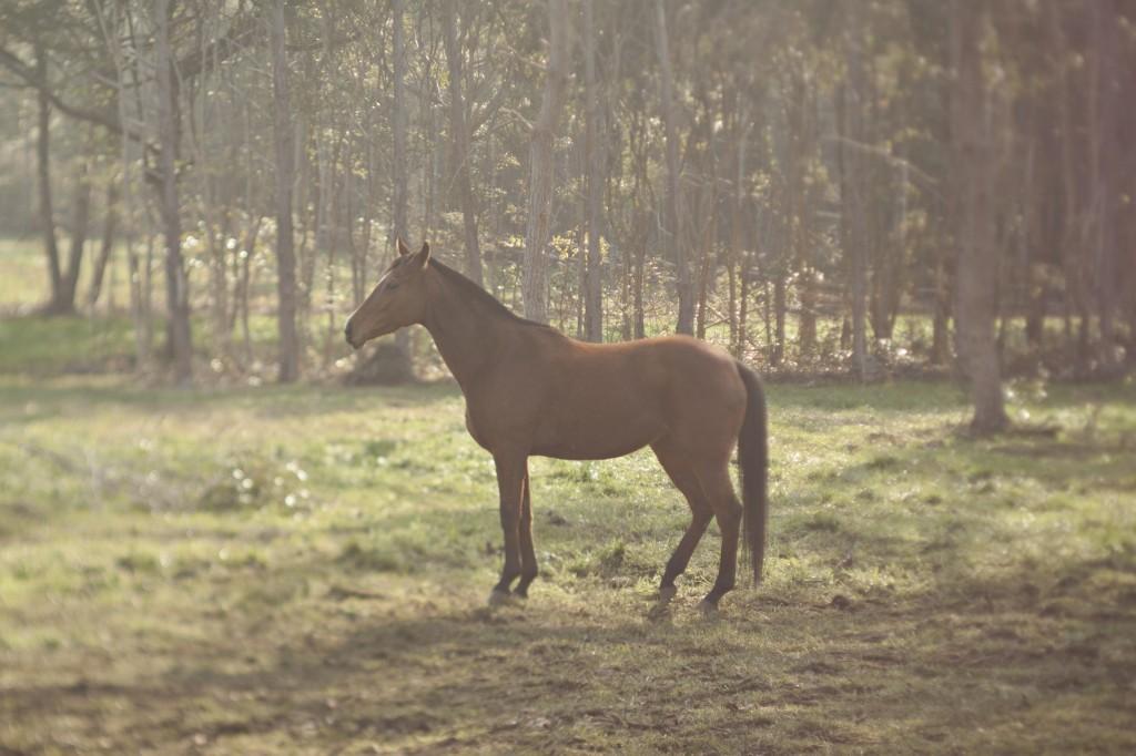 run like horse
